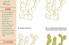 Art Tutorial: How to Draw a Prickly Pear Cactus by Betsy Beier